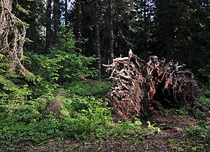 Camping_fallen tree