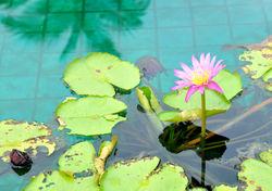 Thailand_khao lak 5