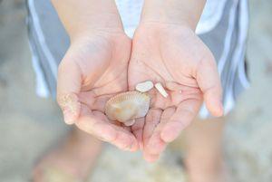 Thailand_shells 2