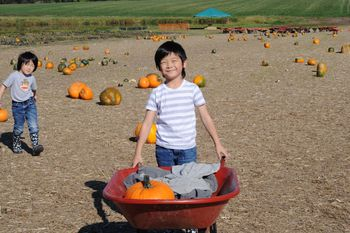Pumpkinpatch3