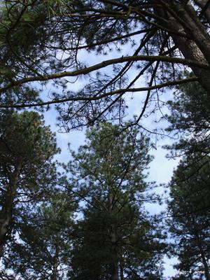 Trees_all_around_ss_375