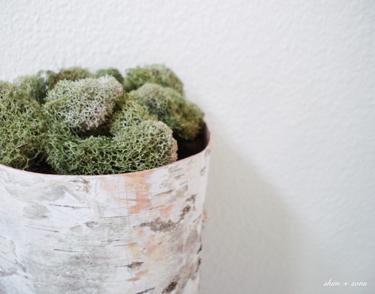 Birch_vases_4_ss_375