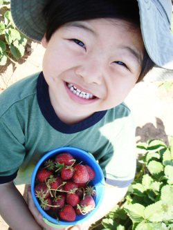 Berry_picking_03_500
