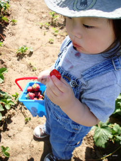 Berry_picking_05_500