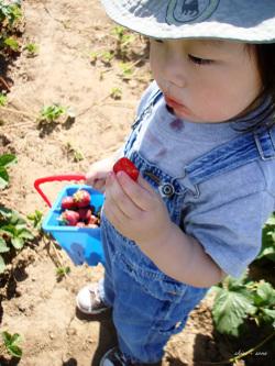 Berry_picking_05_500