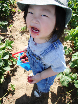 Berry_picking_06_500