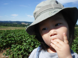 Berry_picking_07_500