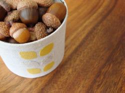Chow_acorns