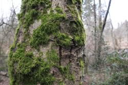 Woods_moss