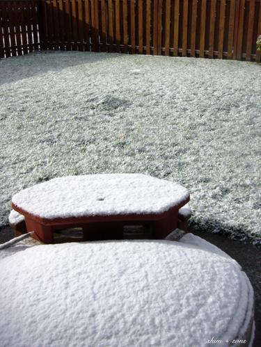 Backyard_snow