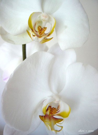 Orchid_2_1