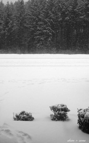 Snowy_day_bw_ss